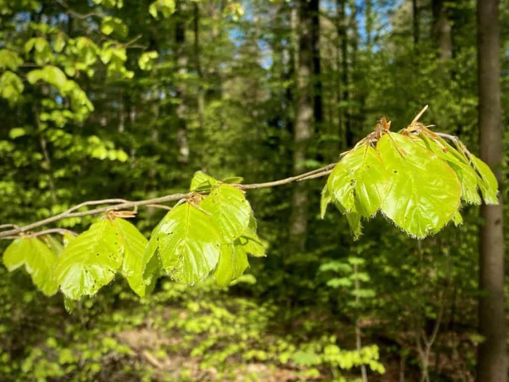 Wald_Frühling
