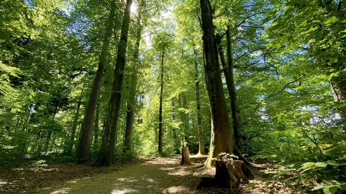 Waldzeit